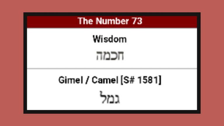 Study #8: GIMEL